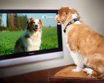 DogTV comes to Amazon Fire and Roku